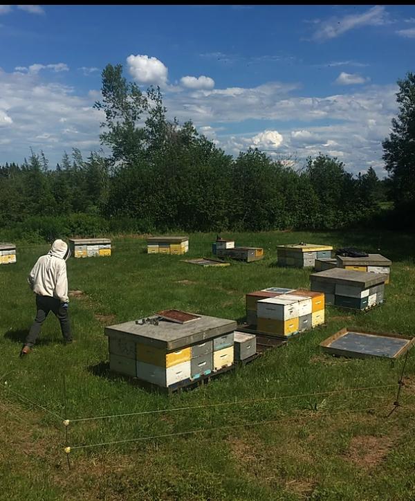 Bees - Trueman Blueberry Farms
