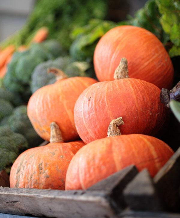 Pumpkin U-Pick - Truemans Farms